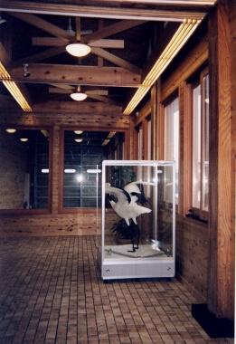 木造建築の施工事例:コミニティプラザ (鶴田町) 2枚目